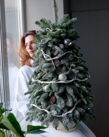 Большая елка из натуральной хвои