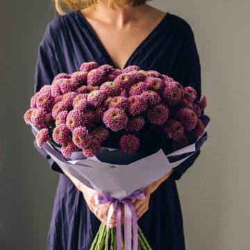 сиреневые хризантемы